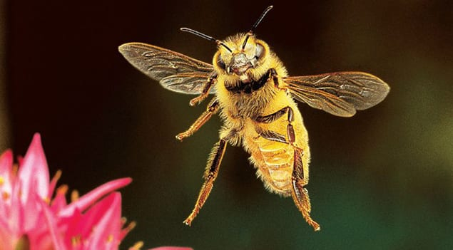 Bee-facts